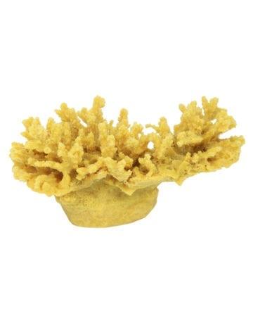 Cauliflower Coral 167 Gold