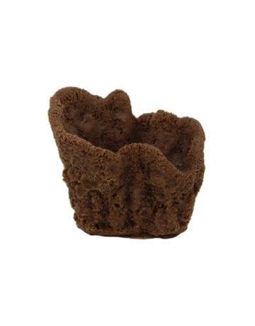 Brown Vase Sponge Coral 221 Image - Creative Coral Design