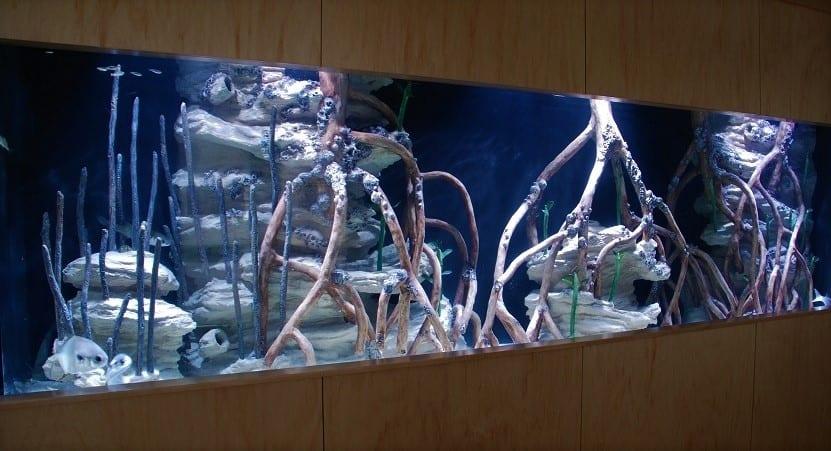 Rectangle Mangrove Image - Creative Coral Design